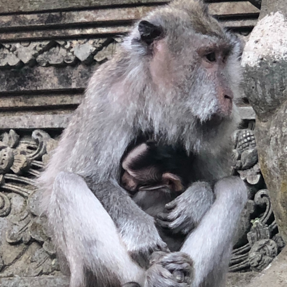 monkeymother